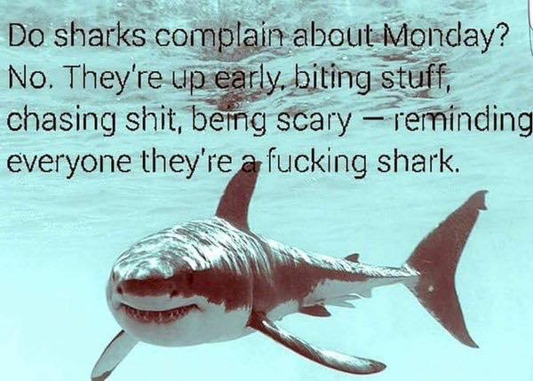 monday-shark