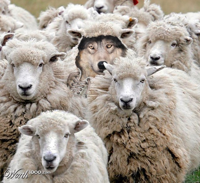wolf-hiding-in-the-sheep